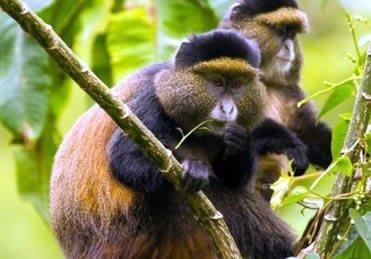 Mgahinga gorilla national parks