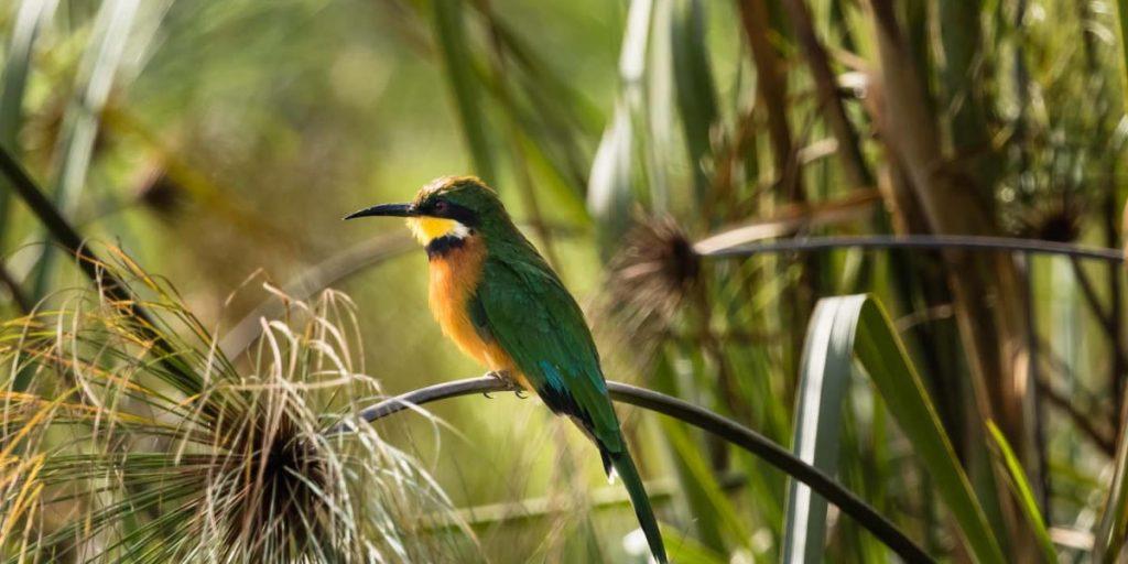 Birding on Lake Bunyonyi