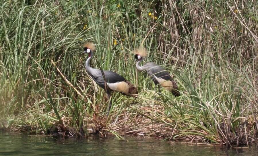 birding at Lake Bunyonyi